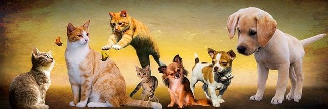 Felelős állattartás elősegítése (kutya és macska ingyenes ivartalanítása) – avagy hogyan népszerűsítjük közös ügyeinket